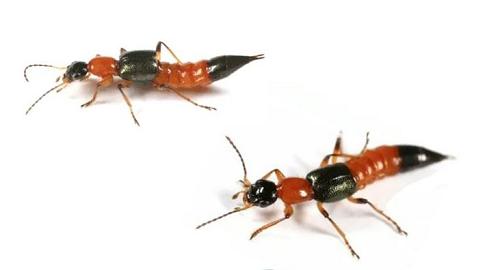 1.통영시 화상벌레 집중방역활동(화상 벌레).png